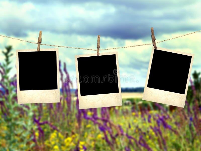 在野花背景的老立即照片  免版税图库摄影