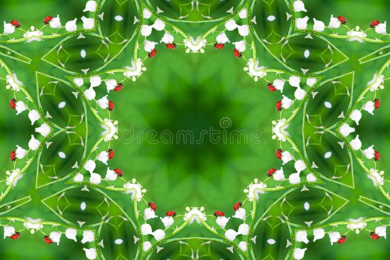 在野花铃兰的瓢虫 免版税库存照片