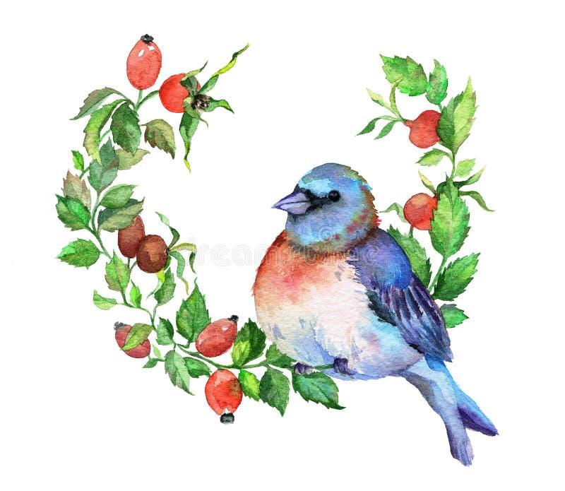 在野蔷薇分支的蓝色鸟 库存例证