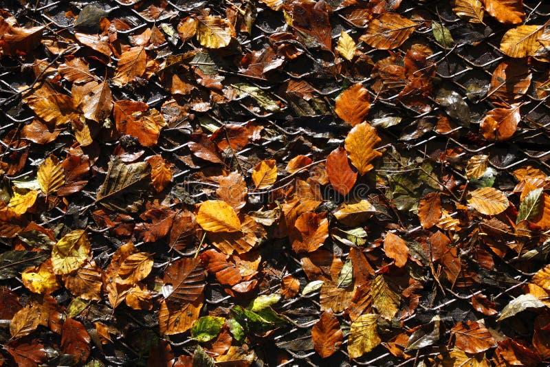 在金属网格的秋叶 免版税库存照片