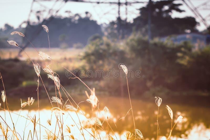 在金黄夏天日落的自然野草 库存照片