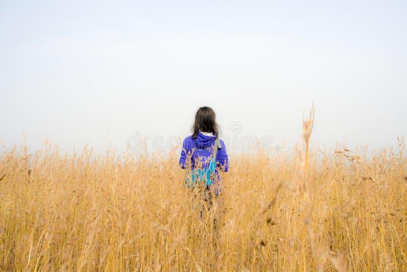 在金黄大草原的秀丽后面 免版税库存照片