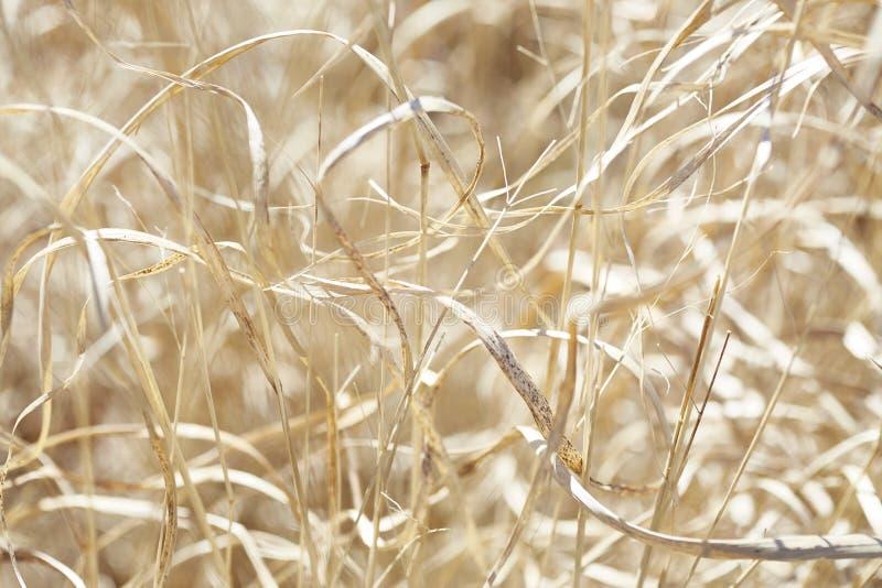 在金黄太阳11的干草 免版税库存照片