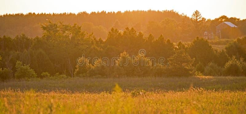 在金黄日落光和农场沐浴的草甸、森林地 免版税图库摄影