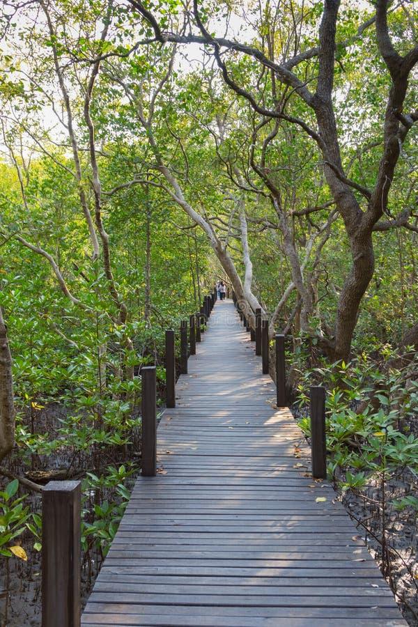 在金黄美洲红树领域Thung橛皮带的一个木桥 免版税库存照片