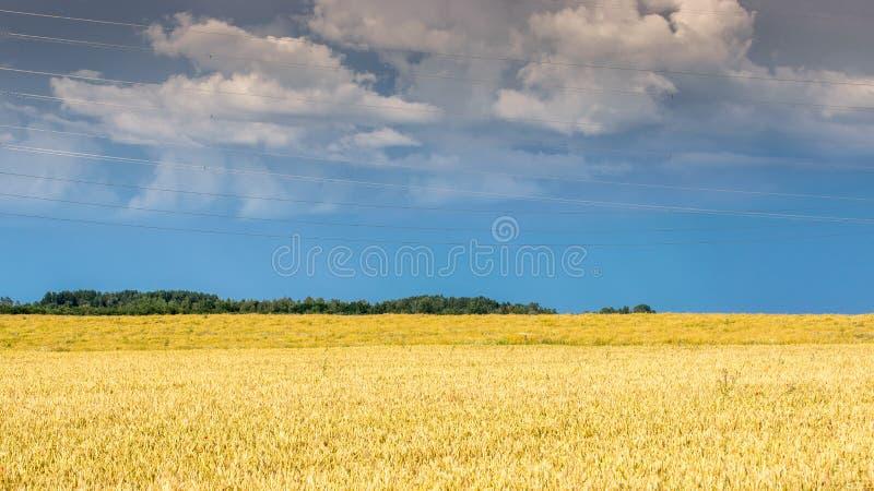在金黄领域的多云天空蔚蓝在雨以后 免版税库存照片