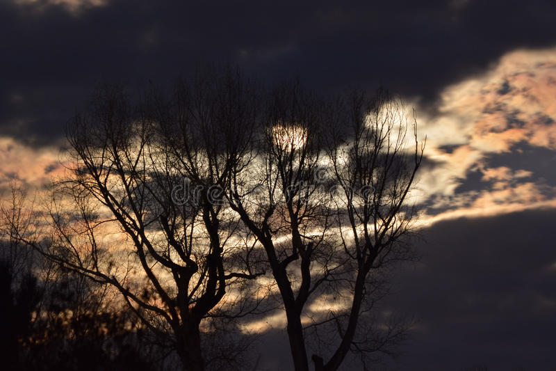 在金黄夜空和鬼的树后的满月 库存图片