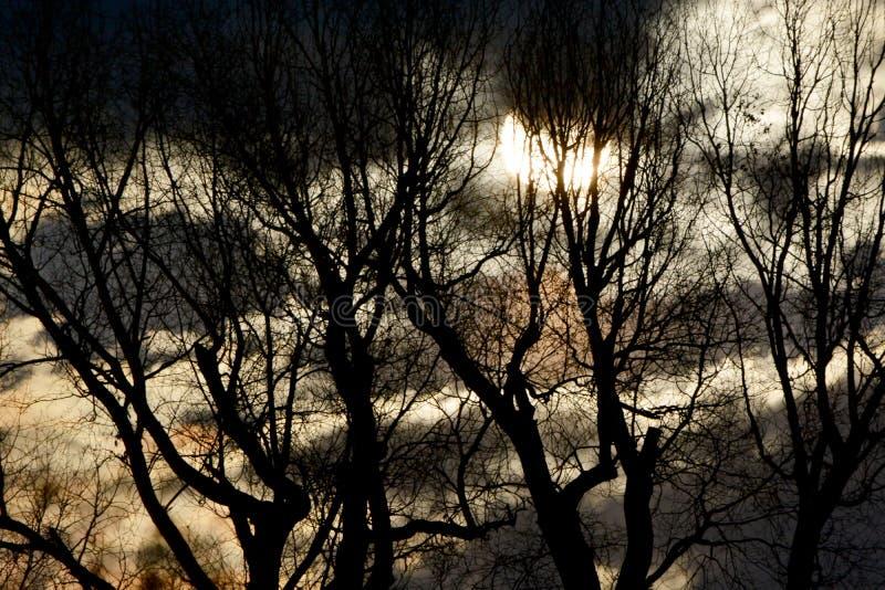 在金黄夜空和鬼的树后的满月 免版税库存图片