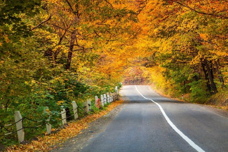 在金黄的柏油路秋天森林 库存图片