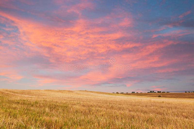 在金黄领域的美好的日落 库存图片