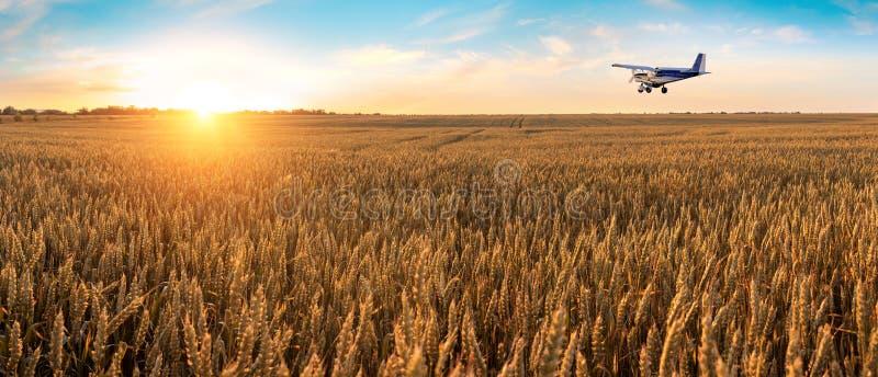 在金黄麦田和蓝天上的飞机飞行与美丽如画的云彩 美好的夏天横向 免版税库存图片
