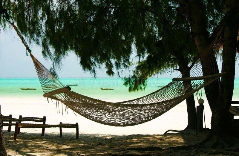 在针叶树树、白色沙子和绿色绿松石海洋背景-帕杰海滩,桑给巴尔之间的被隔绝的空的吊床 免版税图库摄影