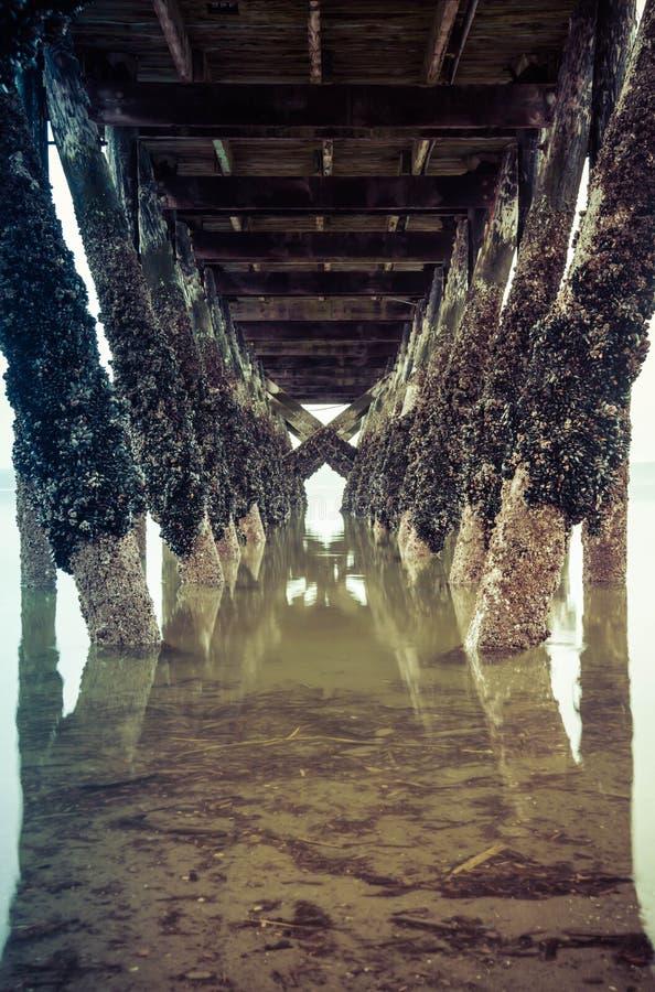 在钓鱼的码头下处于低潮中 库存照片