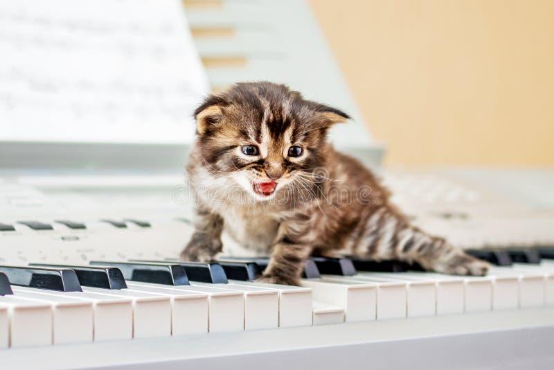 在钢琴钥匙的小的小猫 职业音乐和唱歌 被点燃的  免版税图库摄影