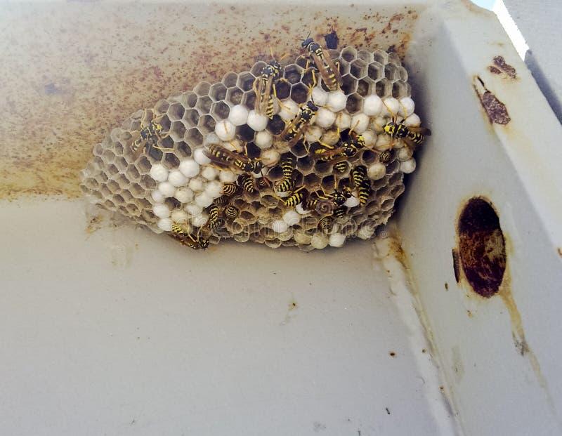 在钢结构的角落的白杨木巢 免版税库存图片