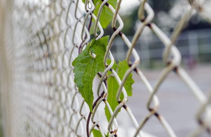 在钢绳滤网的绿色叶子 免版税库存照片