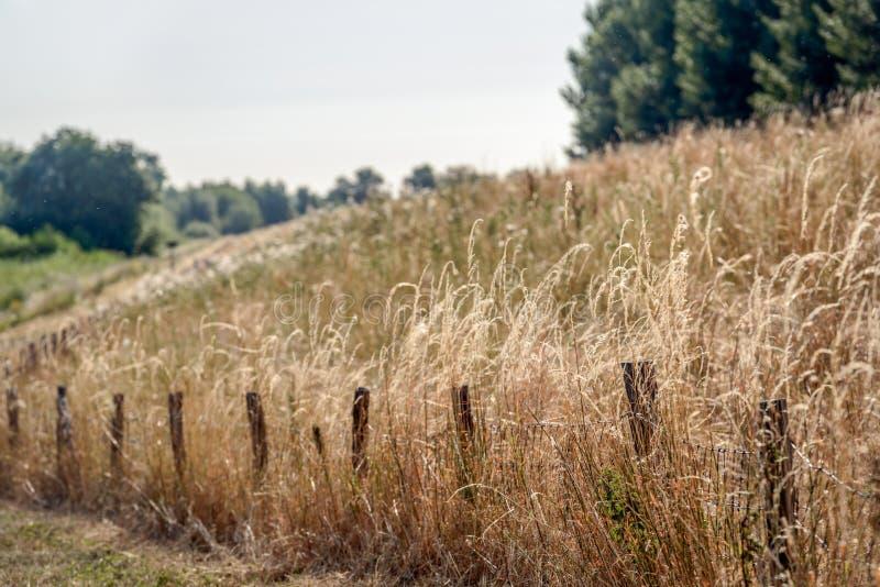 在铁丝网、铁丝网和wo旁边篱芭的开花的草  免版税图库摄影