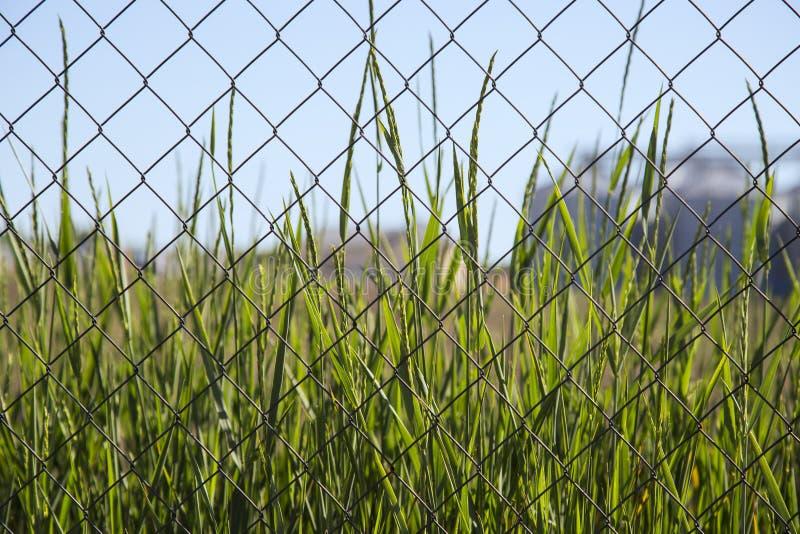 在铁丝网后的绿草 库存照片