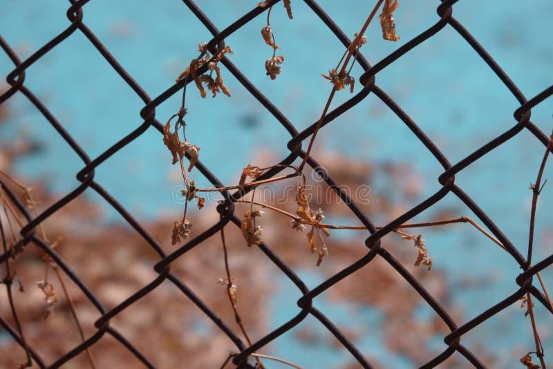 在铁丝网的干燥叶子 库存照片