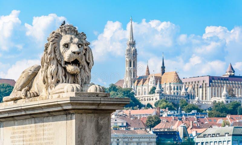 在铁锁式桥梁的狮子雕象在布达佩斯多瑙河 匈牙利 免版税图库摄影