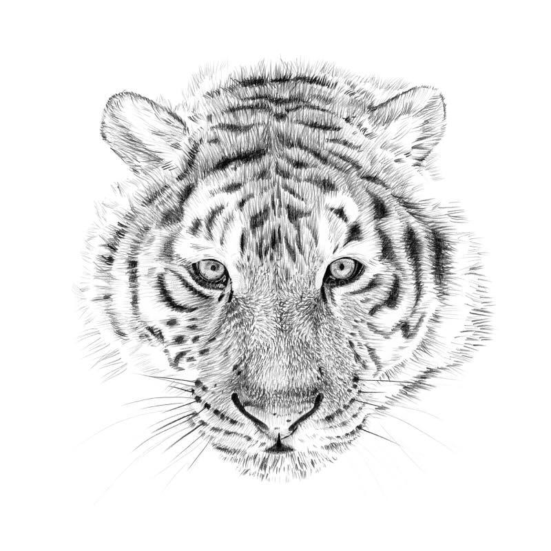 在铅笔用手画的老虎画象 库存例证