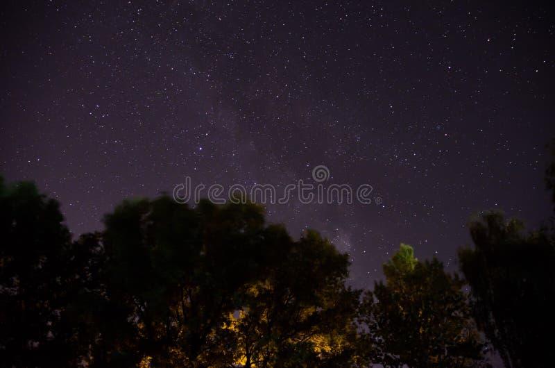 在银河下的林木在夜空 免版税库存照片