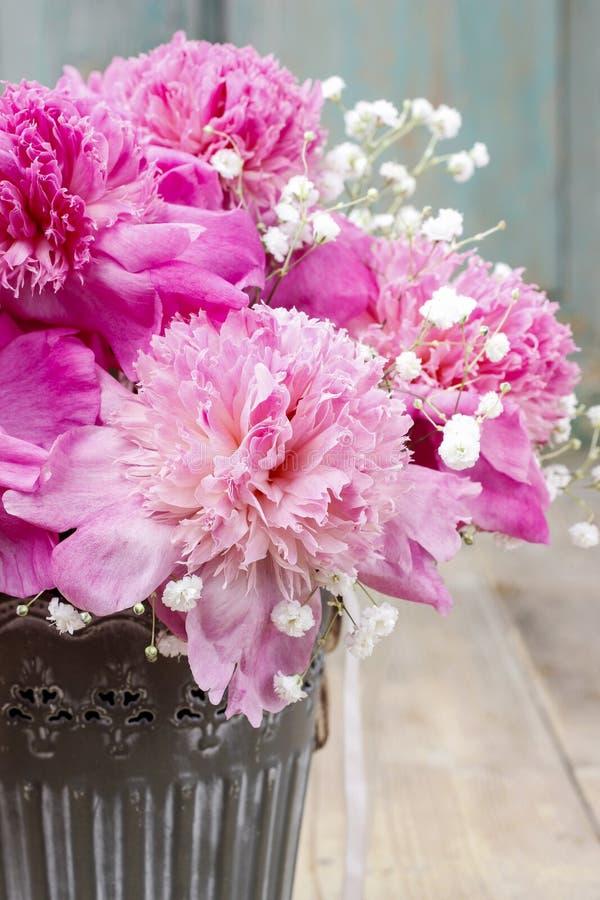 在银色桶的惊人的桃红色牡丹 库存照片
