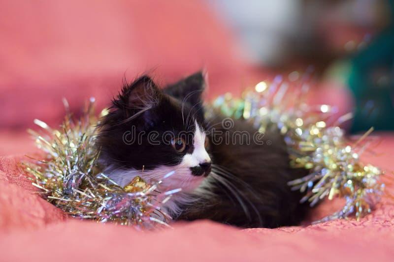 在银色闪亮金属片盖的英俊的黑白猫-圣诞节全部赌注 桃红色背景 免版税库存照片