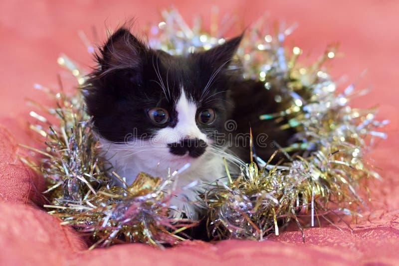 在银色闪亮金属片盖的英俊的黑白猫-圣诞节全部赌注 桃红色背景 库存图片