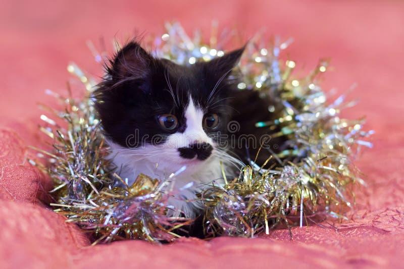 在银色闪亮金属片盖的英俊的黑白猫-圣诞节全部赌注 图库摄影