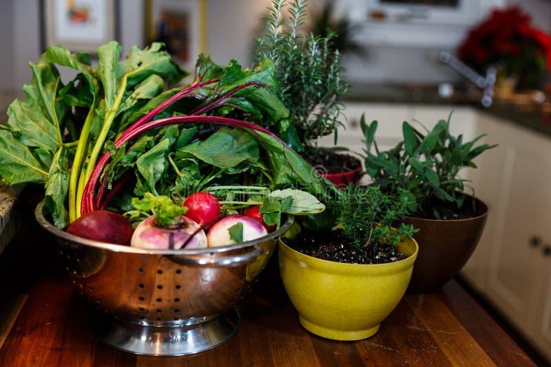 在银色滤锅的新鲜的庭院菜在生长在五颜六色的罐的草本旁边 库存照片