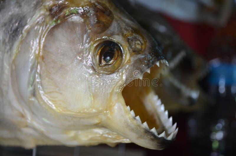 在销售中的比拉鱼在一个市场上在伊基托斯,秘鲁 库存图片