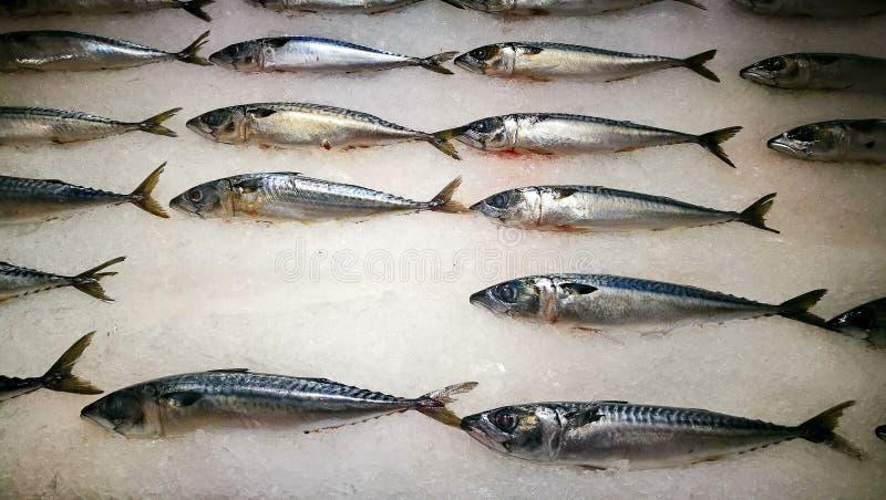 在销售中的鲜鱼 免版税图库摄影