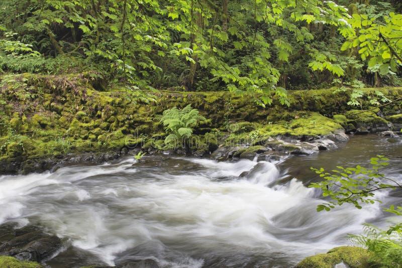 在锡达克里克华盛顿州的冲的水 免版税库存图片