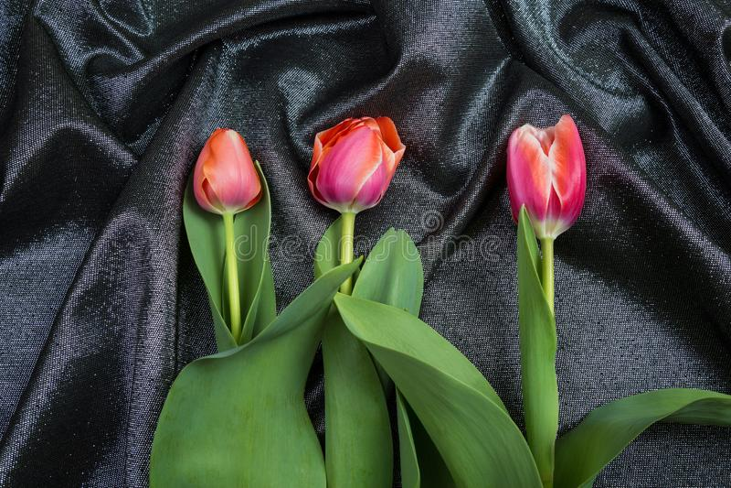 在锦织品的春天嫩桃红色郁金香 库存图片