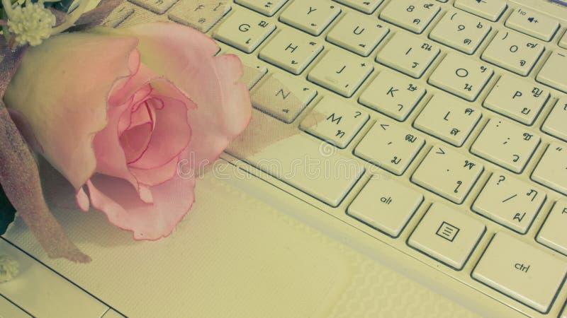 在键盘的桃红色花 库存图片