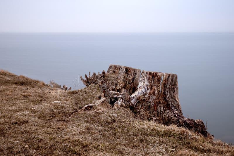 在镇静水前面的树桩 库存图片