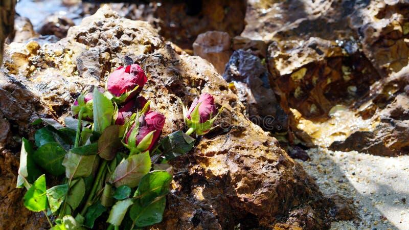 在镇静热带海滩的玫瑰 库存图片