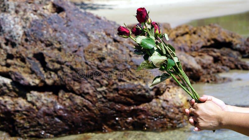 在镇静热带海滩的玫瑰 免版税库存图片