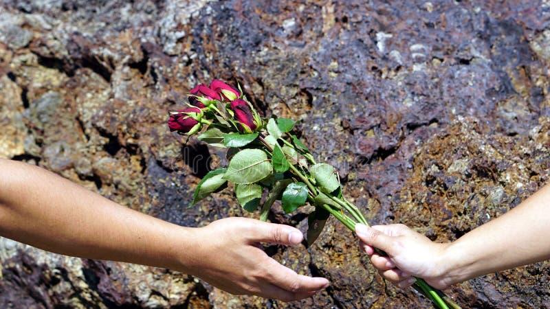 在镇静热带海滩的玫瑰 库存照片