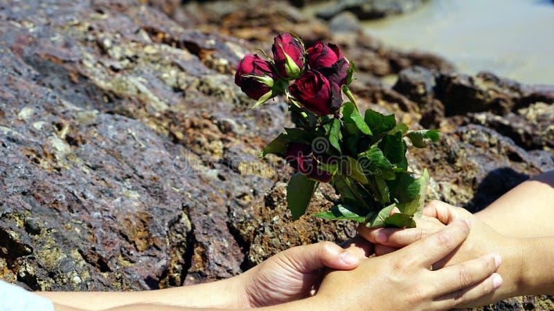 在镇静热带海滩的玫瑰 免版税库存照片
