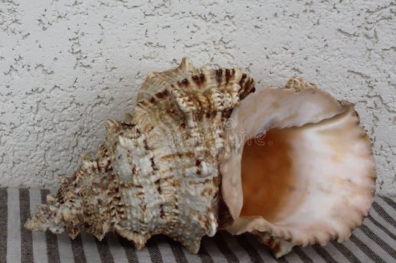 在镶边纺织品的大海扇壳 免版税库存图片