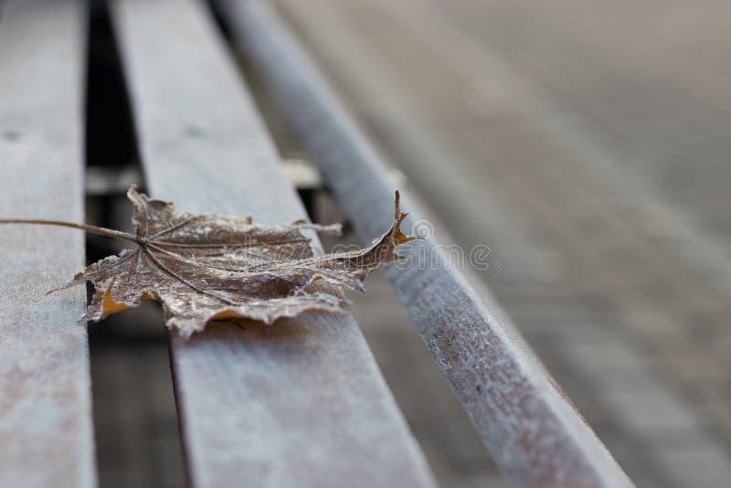 在长凳的唯一枫叶 库存图片