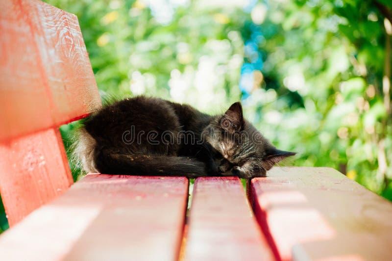 在长凳的小的黑小猫 库存照片