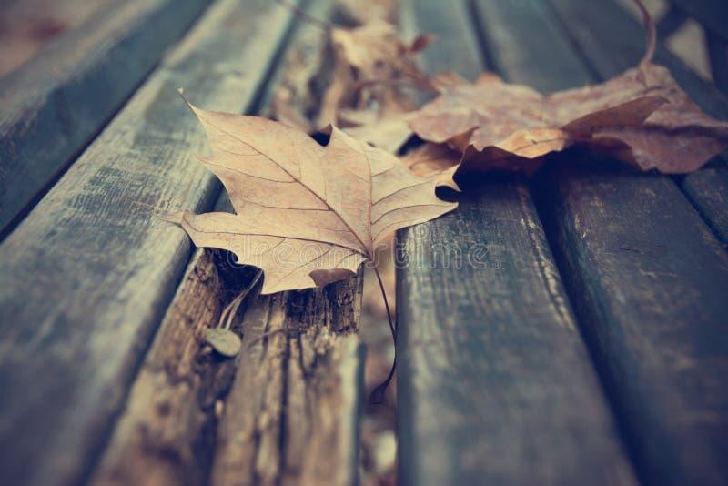 在长凳的死的叶子 免版税图库摄影