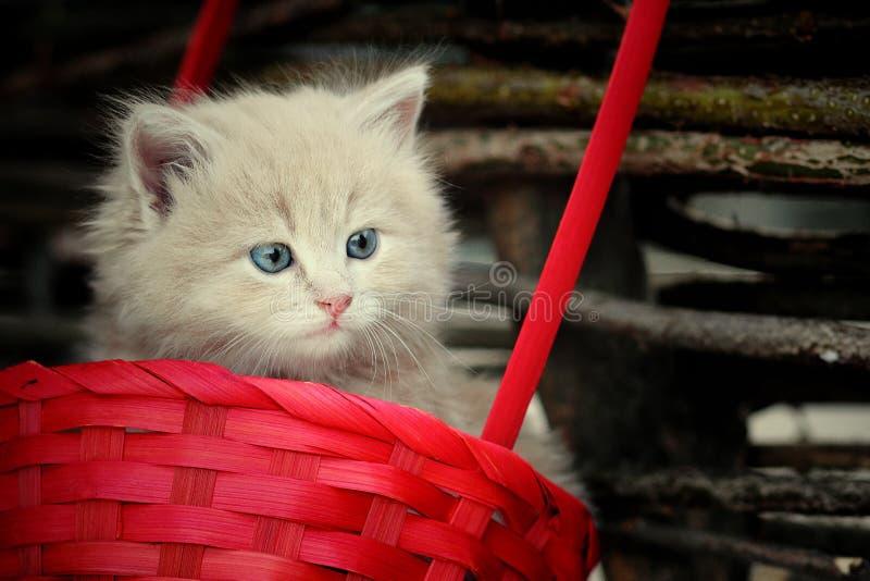 在长凳的猫 库存图片