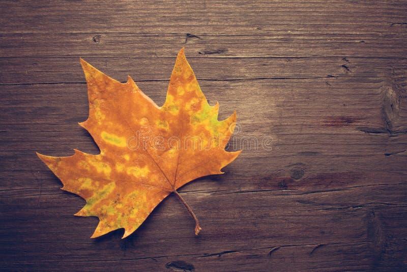 在长木凳的死的叶子在黑暗的背景 免版税库存图片