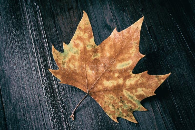 在长木凳的死的叶子在黑暗的背景 免版税图库摄影