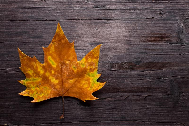 在长木凳的死的叶子 免版税库存图片