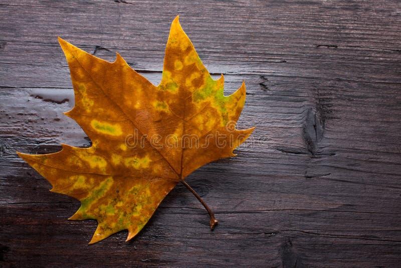 在长木凳的死的叶子 免版税库存照片